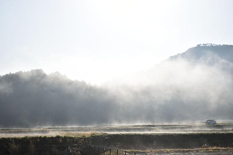 霧の朝 朝霧