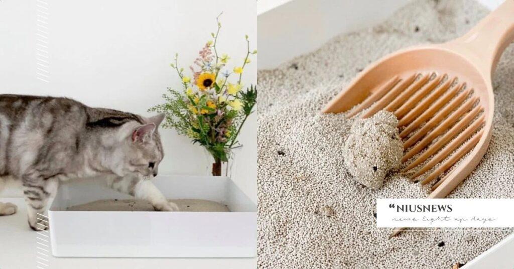 養貓須知:5 種貓砂評比,貓砂怎麼挑?