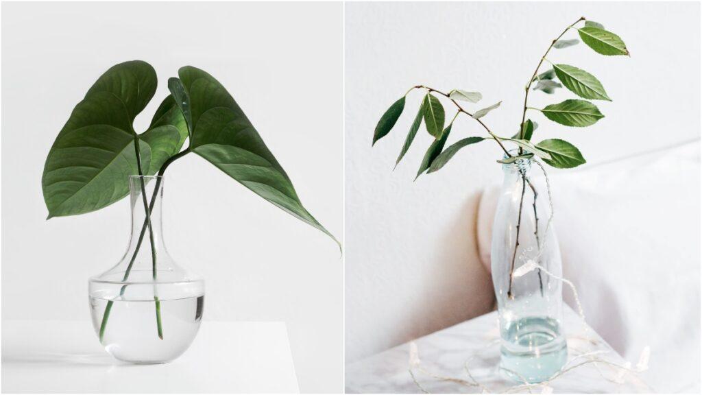 水種植物比起泥種植物的生長需求較低,而且打理方法亦較為簡易!