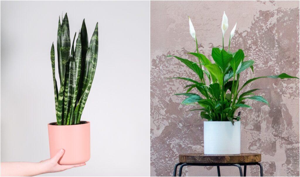 水種植物 容易打理又極具觀賞性!