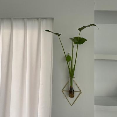 水種植物 - 佛手芋