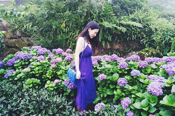 高家繡球花田是相當知名的繡球花賞花景點