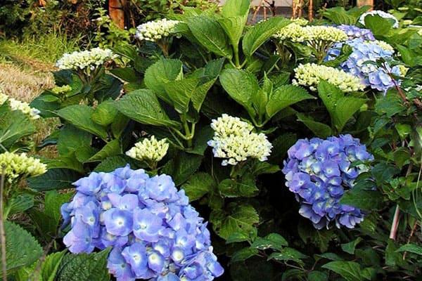 雪霸休閒農場除了繡球花,其他季節也各有不同的花盛開