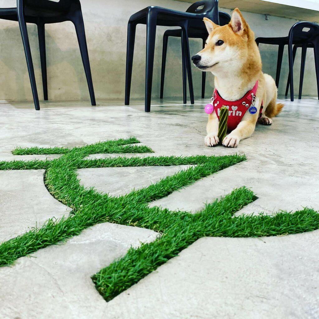 台北寵物友善餐廳推薦:HUNA 創意粥品的店狗