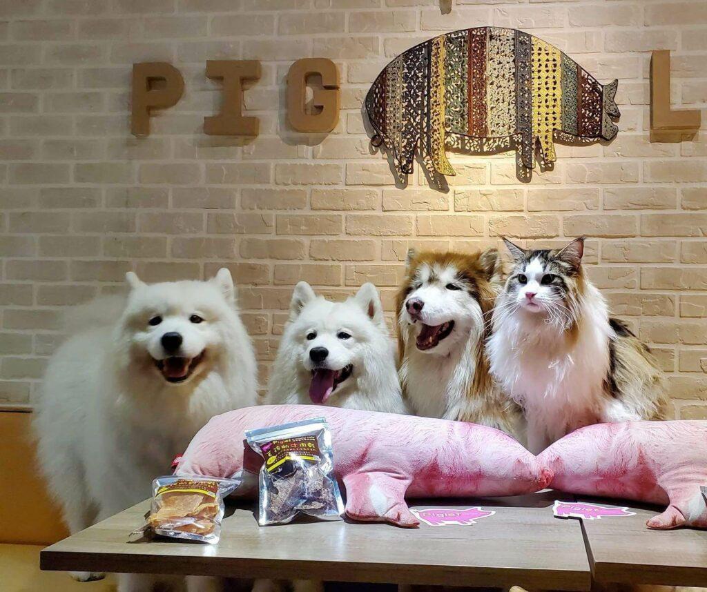 台北寵物友善餐廳推薦:彼克蕾友善咖啡館