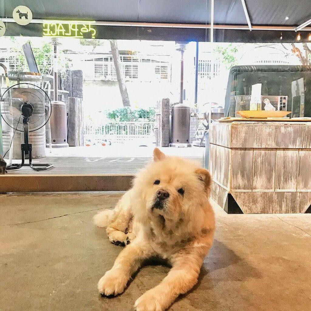 台北寵物友善餐廳推薦:déPLACE 的店狗