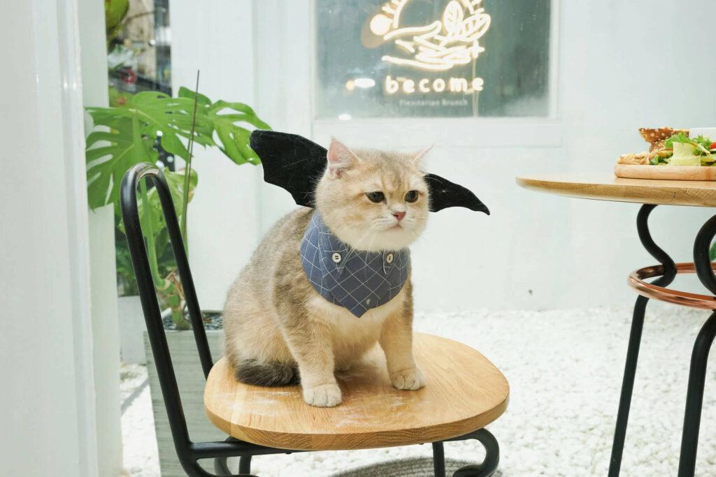 台北寵物友善餐廳:Become 裝潢很韓風