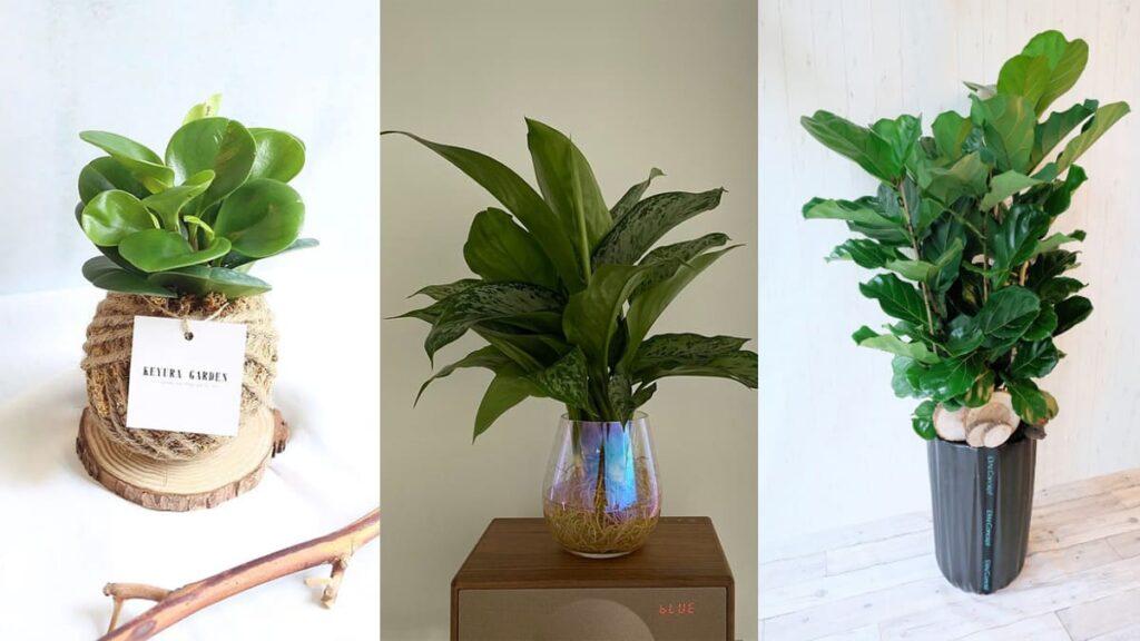 容易照顧的室內和室外植物盆栽種類及推薦