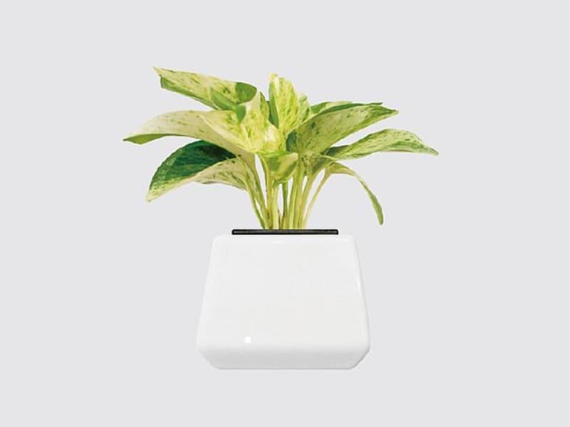 室內小型盆栽植物種類-牛奶黃金葛