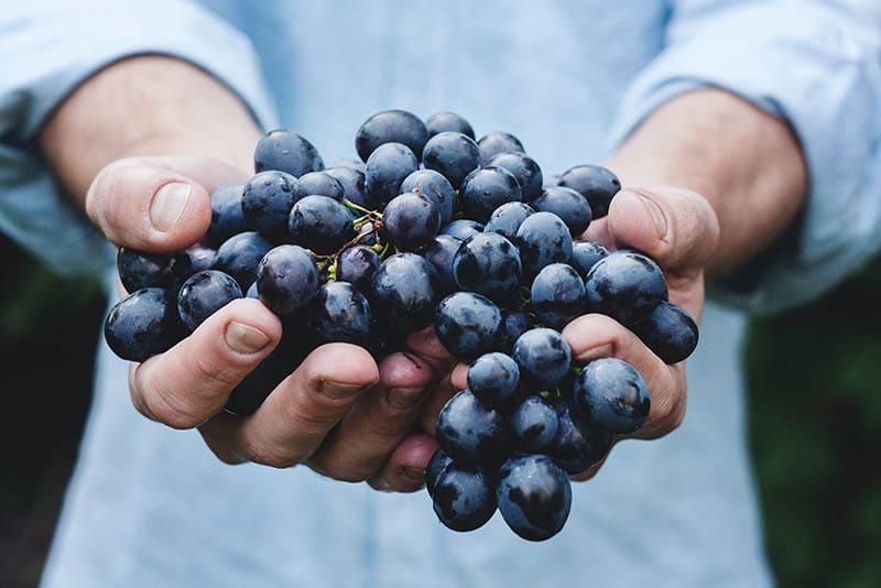 類似葡萄的成串水果不適合拿來清明節拜拜