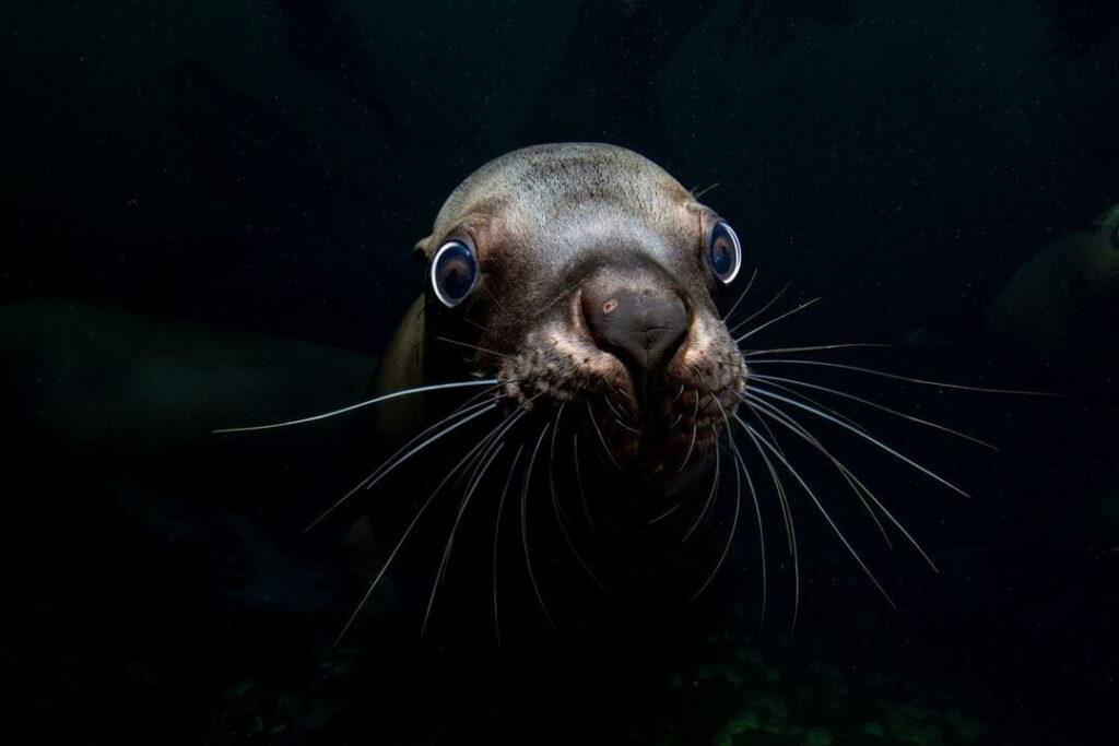 年度海洋攝影大賽