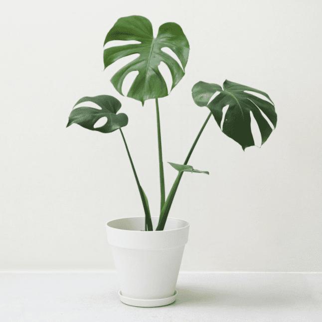 室內擺放植物有利風水